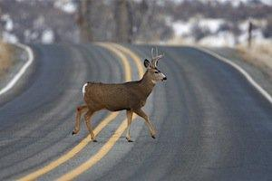 deer collisions, McHenry County traffic accident attorney, McHenry County Traffic Attorney, Illinois traffic accidents, deer-related traffic accidents