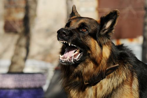 Receiving Injury Compensation After a Dog Attack