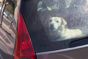 Law Would Give Criminal Defense for Breaking into Vehicles to Save Animals
