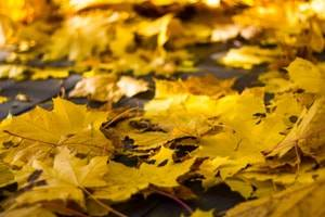 Are Property Owners Liable for Fall Injuries Caused by Leaves?